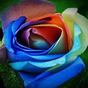 kwiat2