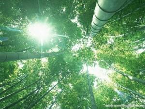 [wallcoo_com]_bamboos_GA089b
