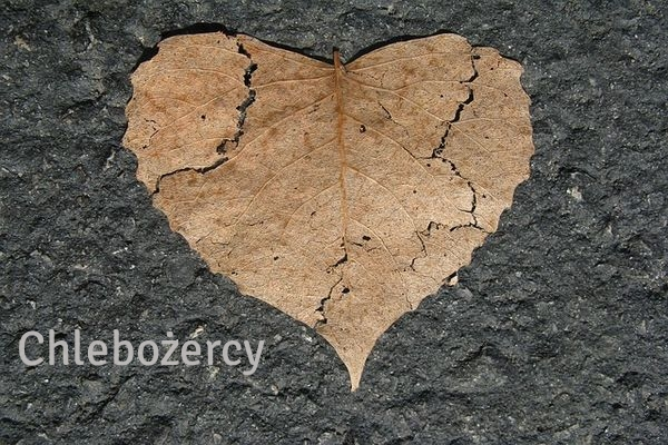 heart-742712_640 (1)